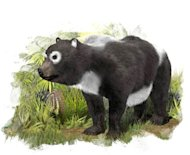 The oldest known ancestor of the giant panda lineage (&lt;em&gt;Ailuropoda melanoleuca&lt;/em&gt;) lived about 11.6 million years ago in what is now Spain.