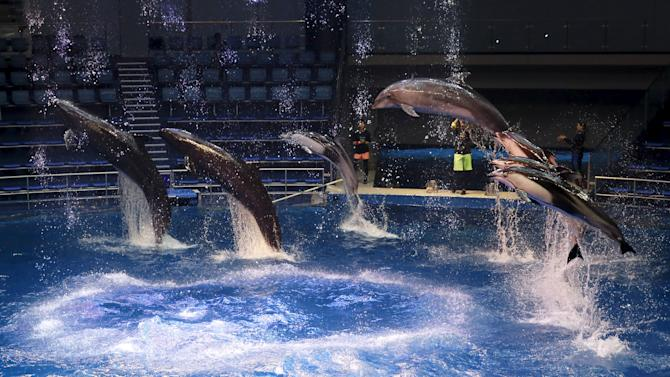 Dolphins jump out of the water during a media preview for the Epson Aqua Park Shinagawa aquarium's re-opening in Tokyo