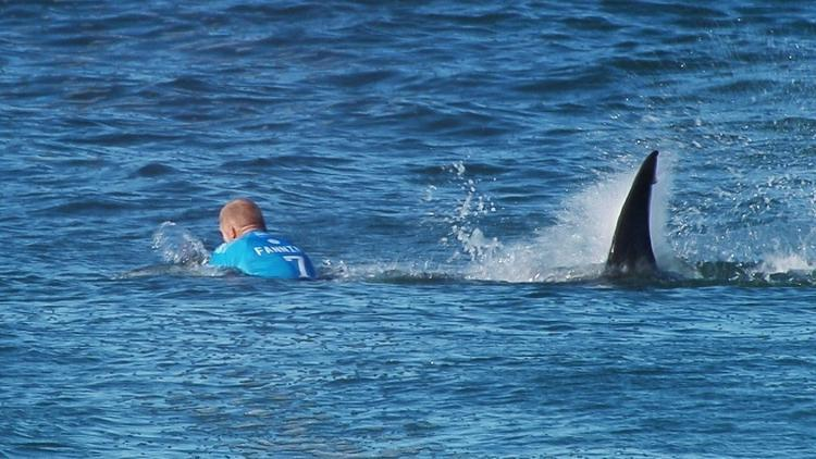 Shark attacks in 2015 shatter record; most were surfing or on boards