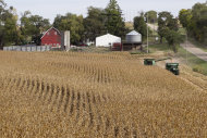 This Sept. 20, 2012 photo shows corn being harvested at Duane Braesch's farm in Bennington, Neb. Braesch's cornfields are prime evidence of how unforgiving the elements have been for him and so many others across the Midwest this summer. (AP Photo/Nati Harnik)
