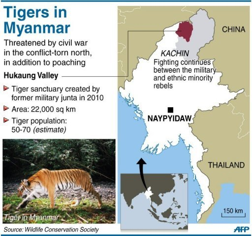 Tigers in Myanmar