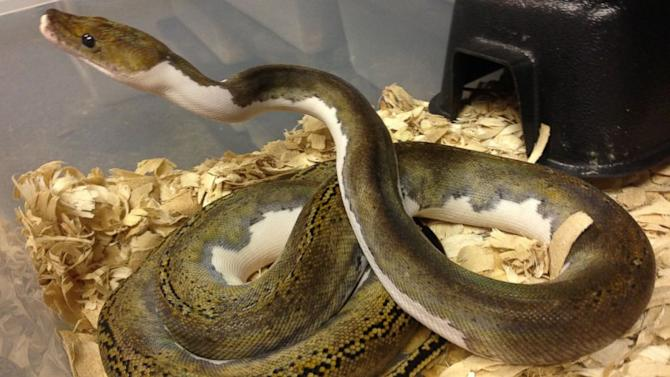 Snakes Worth $30,000 S-s-s-swiped From Store