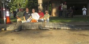 Handout of Mandy and John Stokes, brother-in-law Jenkins and children Savannah and Parker pose with an American alligator measuring 15 feet long and weighing 1,011.5 lbs caught in a state park in Alabama