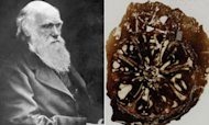 Darwin&#39;s Lost Fossils Found In Desk Drawer