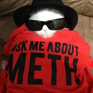 Breaking Cute: Cat Looks Scarily Like Walter White