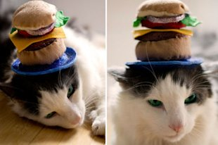 Cheeseburger Cat