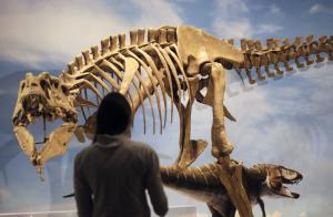 A new species of tyrannosaur unearthed in Grand Staircase-Escalante …
