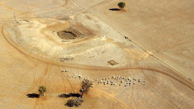 In this July 13, 2002, file photo, sheep wander parched land near a dry reservoir on a Condobolin property, 460 kilometers (285 miles) northwest of Sydney. On the world's driest inhabited continent, drought is a part of life, with the struggle to survive in a land short on water a constant thread in the country's history. The U.S. state of California is looking to Australia for advice on surviving its own drought. (AP Photo/Rick Rycroft, File)