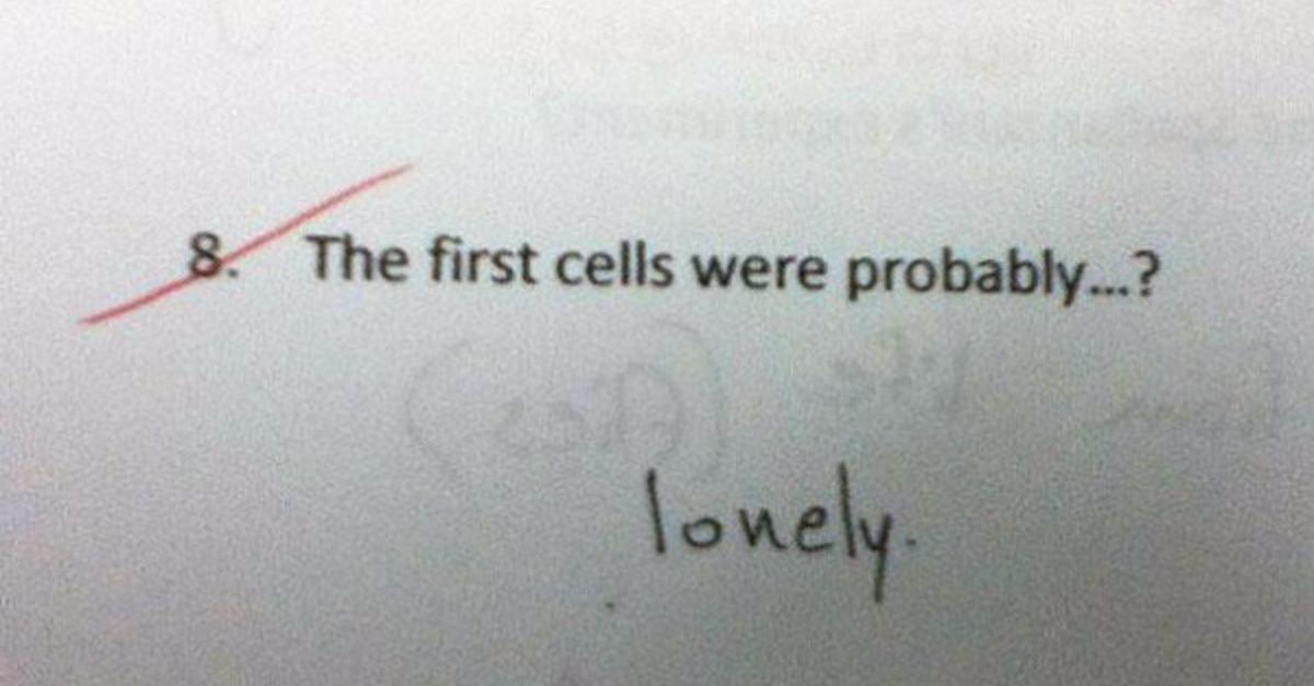 These Test Answers May Be Wrong But Are GENIUS