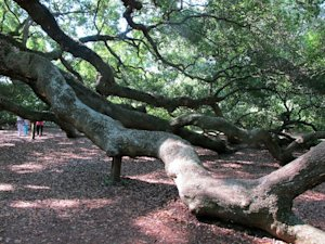 Visitors, rear, left, approach the branches of the…
