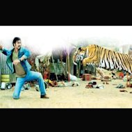 Ajay Devgn Fought A Tiger For Real In 'Himmatwala'