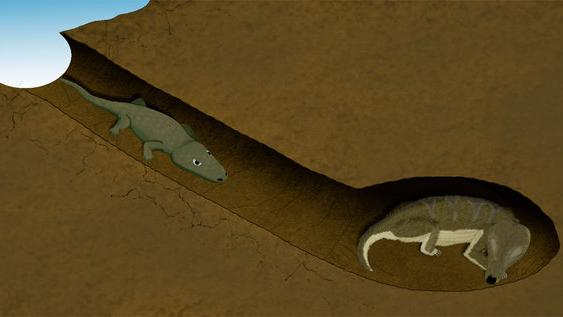 Ancient Odd Couple Discovered in Fossilized Burrow