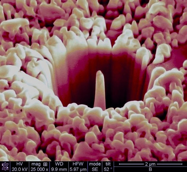 2012 FEI Electron Microscope Photo Contest