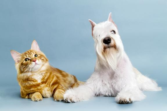 Here, Bella! Top Pet Names for 2012