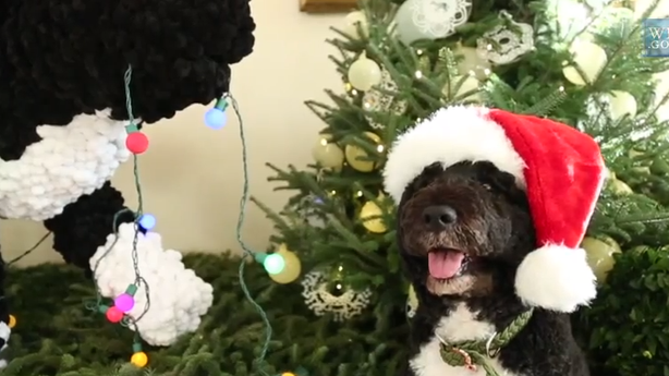 Here's Bo the First Dog Being Really Cute Under the White House Christmas Tree
