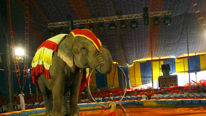 In this April 9, 2013 photo, a circus artist performs with an elephant at the Rambo Circus on the outskirts of Mumbai, India. Circuses around the world may struggle to compete with an ever-increasing array of entertainment options, but India's once-widespread industry in particular has gone through cataclysmic changes. In the 1990s, there were 300 circuses operating throughout the country. That number has now dwindled to about 30, says circus manager John Matthew, and many of those are in financial trouble due to rising costs of renting field space, shrinking revenues and - crucially - two Supreme Court rulings that took away two of the industry's main attractions. (AP Photo/Rafiq Maqbool)