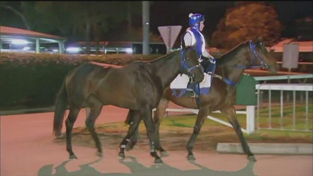 Black Cavier chases record 25th win in Sydney