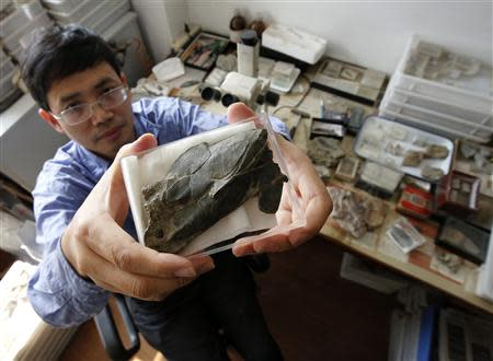 Min Zhu, professor at the Institute of Vertebrate Paleontology and Paleoanthropology, shows a fossil of the Entelognathus primordialis, in Beijing