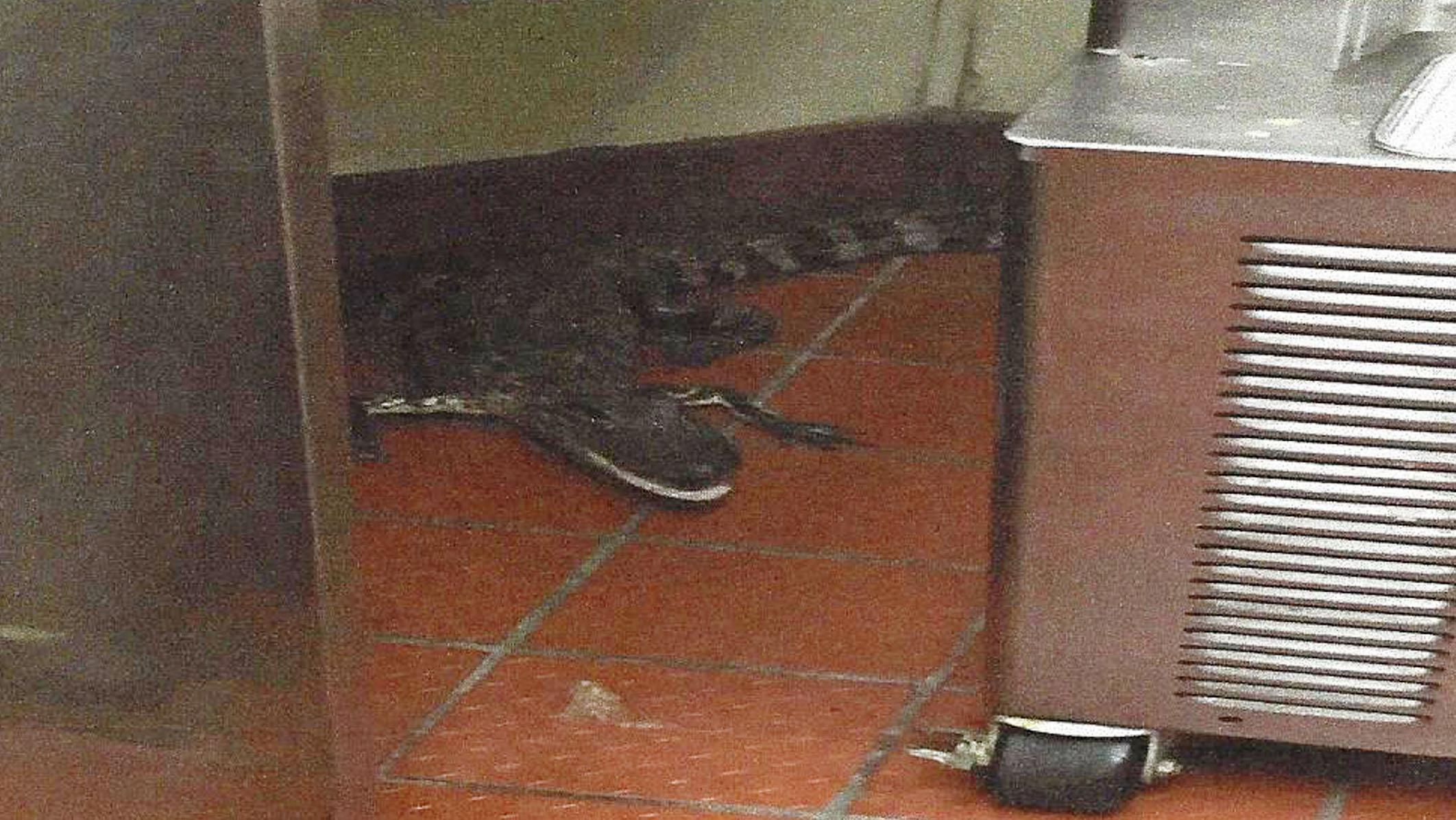Florida man charged with tossing live alligator into Wendy's drive-thru