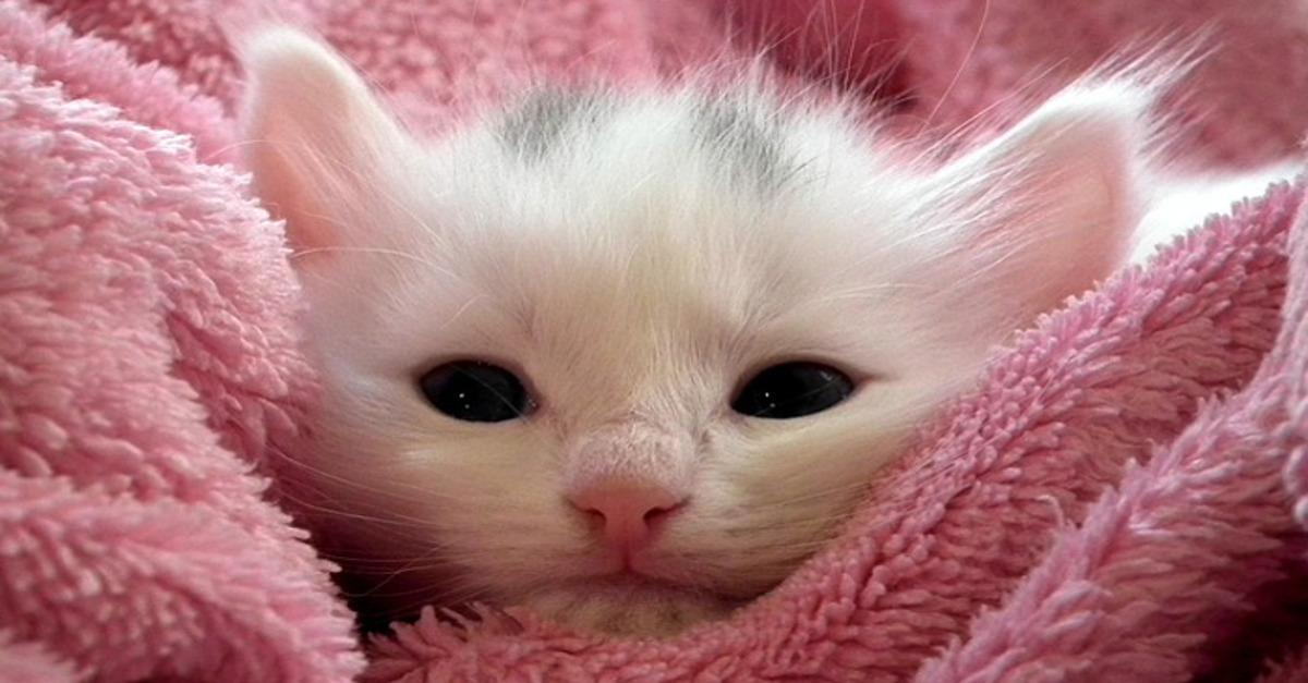 Cute Kitties You'll Fall In Love With