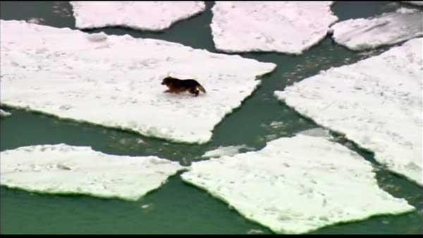 Dog saved from Lake Michigan ice by a kayaker