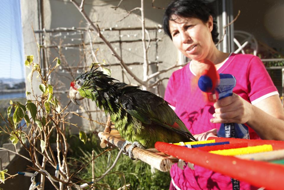 "In this photo taken on Tuesday, Feb. 8, 2012, Mira Tweti, Executive Director, National Parrot Care & Cage Xchange, gives a bath to a rescue parrot named ""Liberty,"" in her apartment in the Marina Del Rey area of Los Angeles. (AP Photo/Damian Dovarganes)"