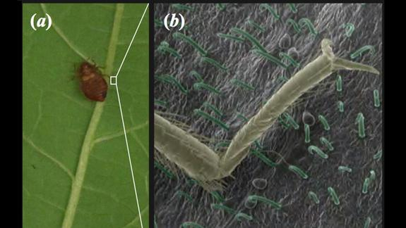 Plants Inspire Sticky Trap for Bed Bugs