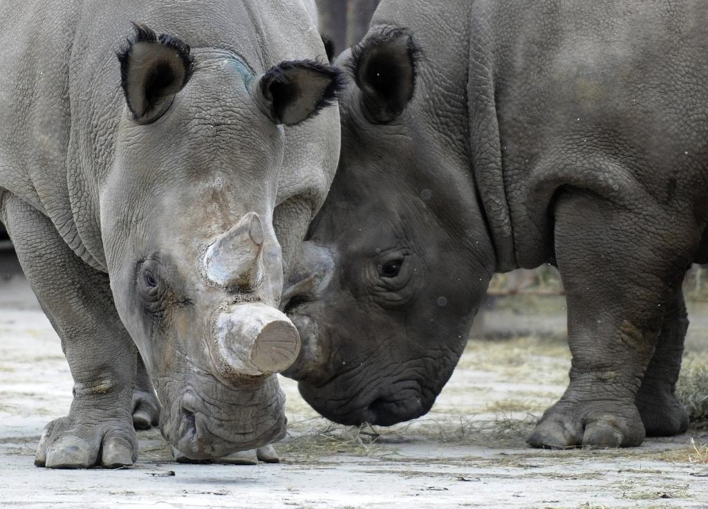 Crisis talks to save endangered rhino
