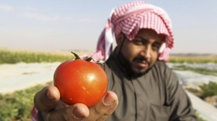 A farmer holds up a freshly harvested tomato on a farm in Al-Kharj, south of Riyadh