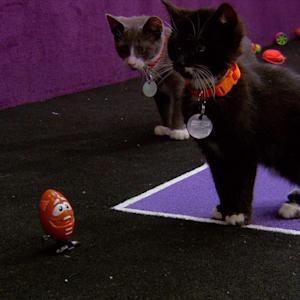 Kitten Bowl Makes Its Debut