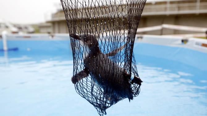 Penguin Oil Spill