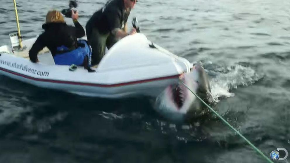 Anti Cage-Diving Groups Use Video of Great White Shark Attack to Highlight Problem