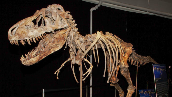An image from documents released from the U.S. Attorney's office, Monday, June 18, 2012 shows the fossil of a Tyrannosaurus bataar dinosaur at the center of a lawsuit demanding its return to Mongolia. A lawsuit brought by the U.S. government demanded Monday June 18, 2012, the fossil be turned over to the United States by an auction house so that it can be returned to its home in Mongolia.   (AP Photo/U.S Attorney Office for the Southern District of New York, Handout)