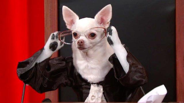 Supreme Court Case Florida v. Jardines As Retold by Dogs - Animalist News