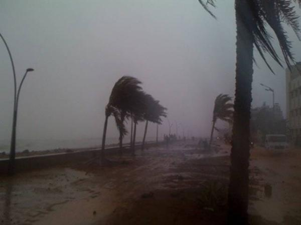 Coconut palms bend and sway as Cyclone Thane lashes Puducherry