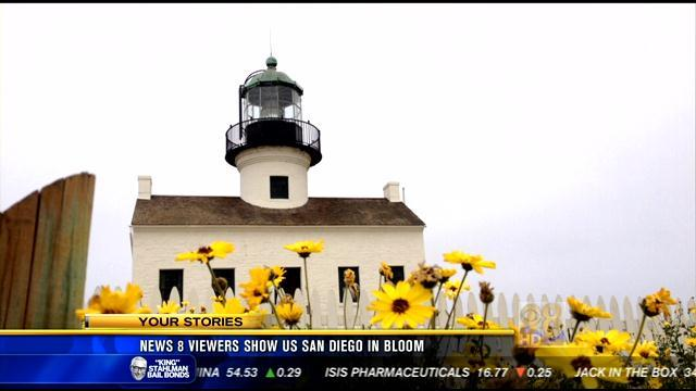 News 8 viewers show us San Diego in bloom