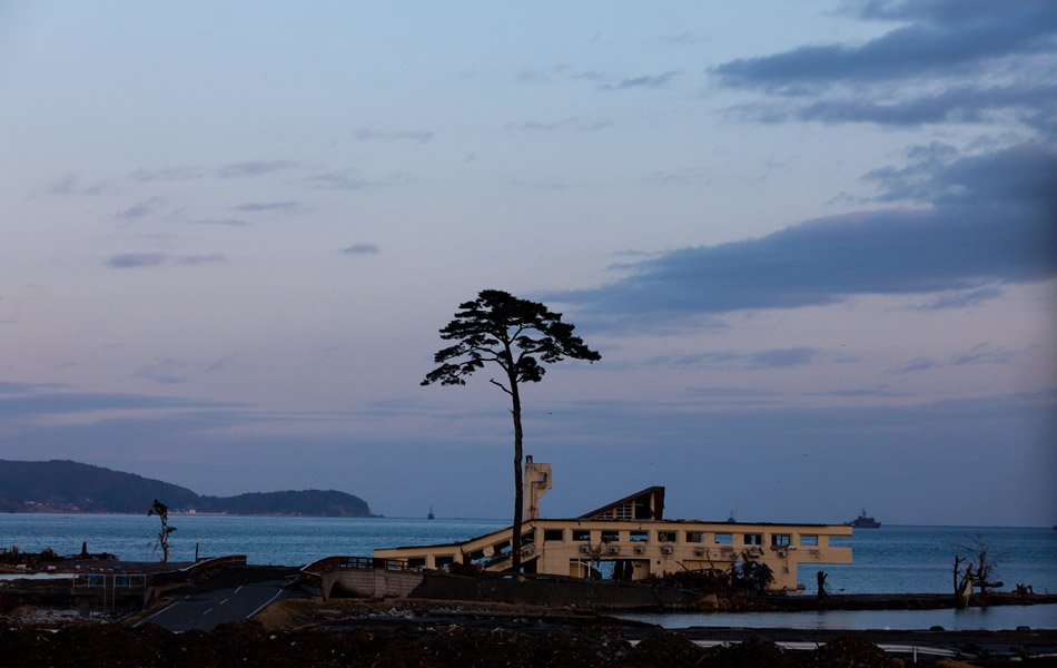 'Miracle' tree removed in tsunami-ravaged city
