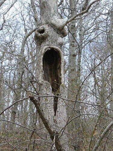 The creepiest trees on Earth