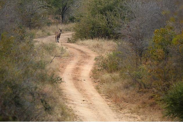 Travel Wildlife South Africa Kruger National Park