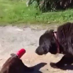 Dog Saves Cat From Cup
