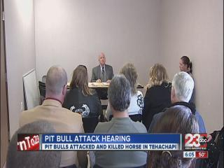 animal control hearing decides pit bulls future