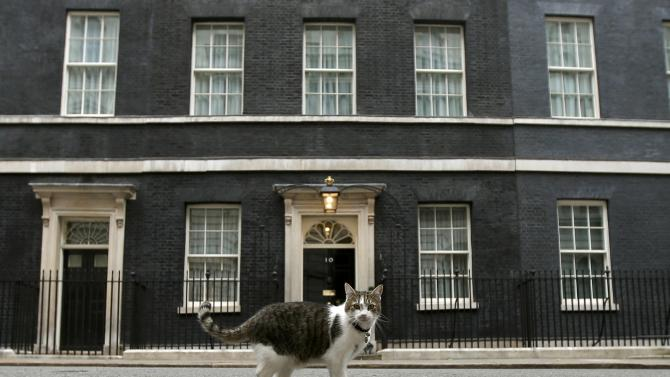 Larry the Downing Street cat walks outside Number 10 Downing Street in London
