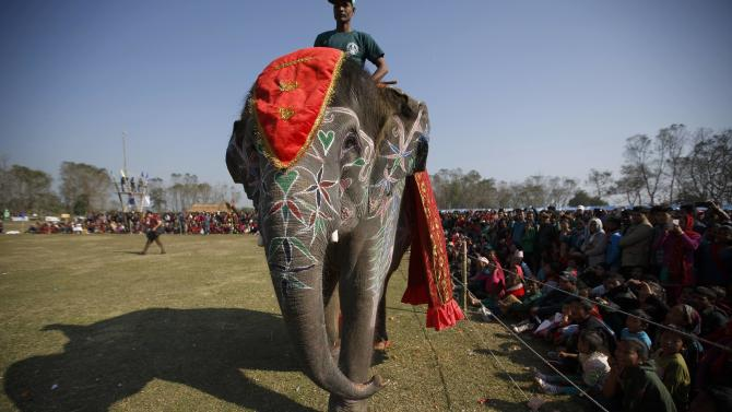An adorned elephant takes a walk near the spectators during the elephant beauty contest organised at the Elephant Festival event at Sauraha in Chitwan
