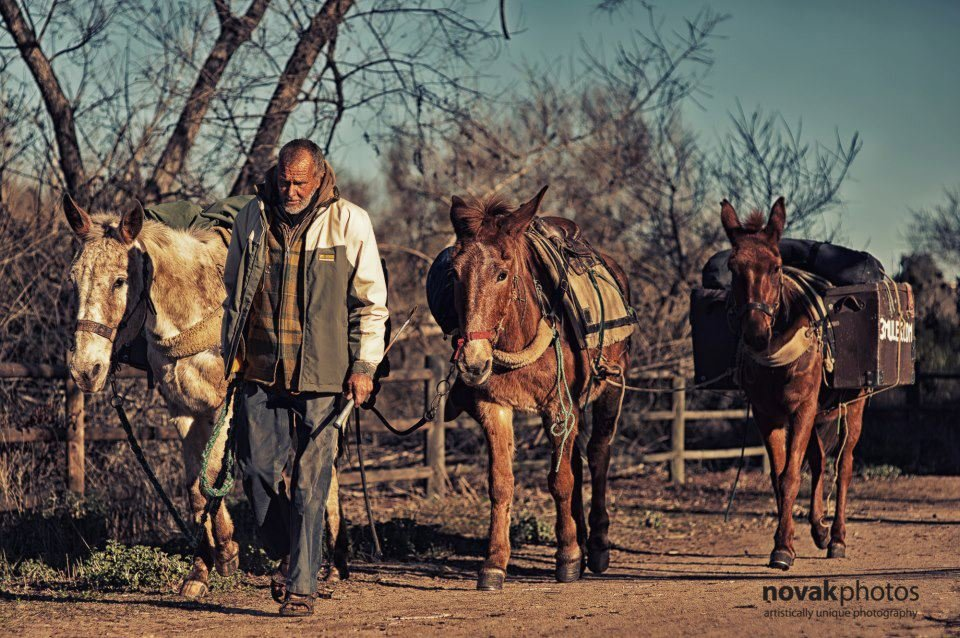 There_Is_a_Man_Wandering-e0fd069272906e10539651f636b88ed7 - There Is a Man Wandering Around California With 3 Mules - Lifestyle, Culture and Arts