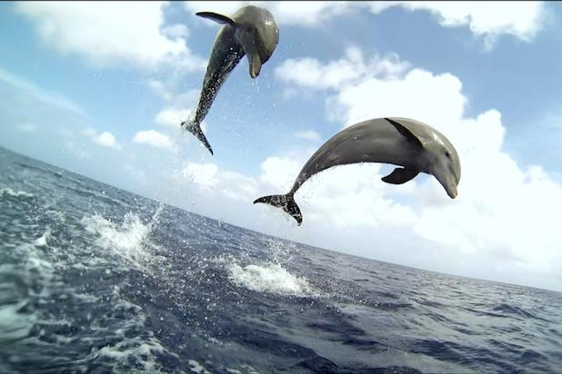 Discovery Uses Robotic Fish and Hidden Cameras on New Special 'Dolphins: Spy in the Pod' (Exclusive)