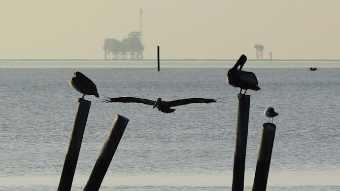 Pelicans sit on pilings along the Dauphin Island Parkway