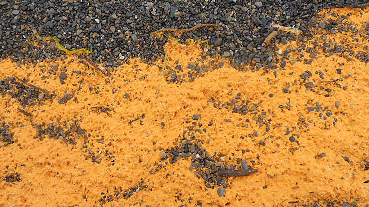 This Aug. 3, 2011, photo provided by Mida Swan shows an orange colored substance that washed ashore in the village of Kivalina, Alaska, a village on the state's northwest coast about 625 miles northwest of Anchorage, Alaska. The Coast Guard says the substance is not man-made and might be some type of algae. Further tests will be conducted. (AP Photo/Mida Swan)