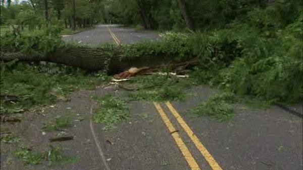 Large tree falls on Martin Luther King Drive