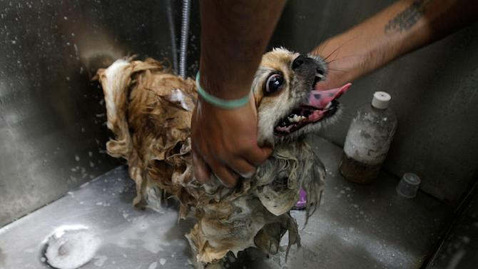A groomer bathes a dog at a pet grooming salon in New Delhi July 18, 2012. A Euromonitor research report estimates that India's pet industry is expected to grow 22 percent this year and reach 4.5 billion rupees (around $81 million), in a nation where the per capita income is $1,256. Dogs account for 80 percent of all pets in India, with cats and fish also popular. Picture taken July 18, 2012. REUTERS/Parivartan Sharma