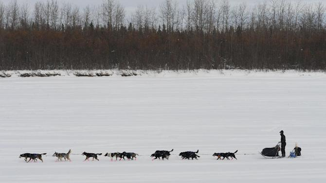 Musher Matt Failor drives his team down the Kuskokwim River after leaving the Iditarod checkpoint in McGrath on Wednesday, March 6, 2013. (AP Photo/The Anchorage Daily News, Bill Roth)  LOCAL TV OUT (KTUU-TV, KTVA-TV) LOCAL PRINT OUT (THE ANCHORAGE PRESS, THE ALASKA DISPATCH)